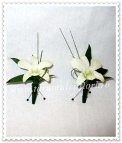 Cocarde orhidee dendrobium.42